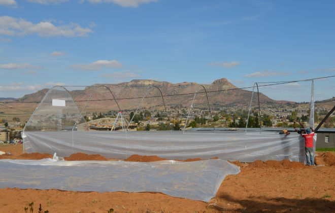 Greenhouse installed for Mosotho entrepreneur